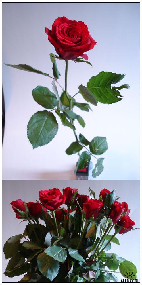 Фотоклипарт - Rose pack 1