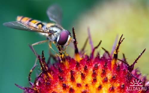 Макро фотографии с пауками и насекомыми разных видов