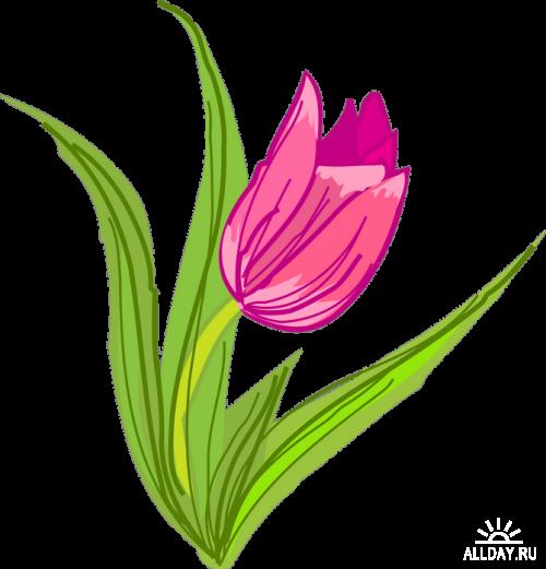 Beautiful Tulips Прекрасные тюльпаны