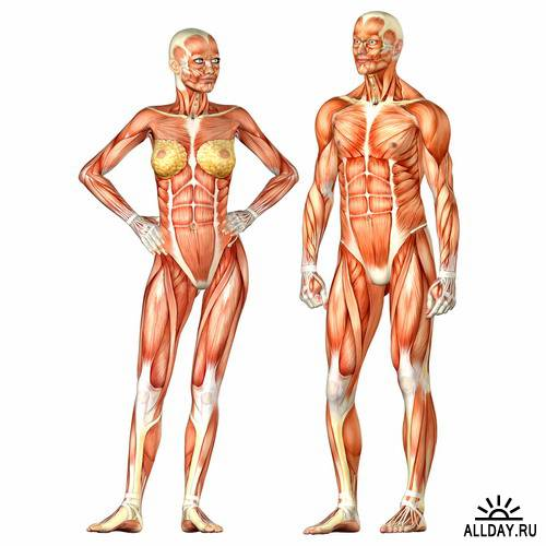 Anatomy & Medicine 3D
