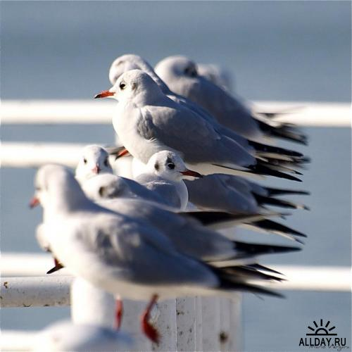 Мир в Фотографии - World In Photo 343