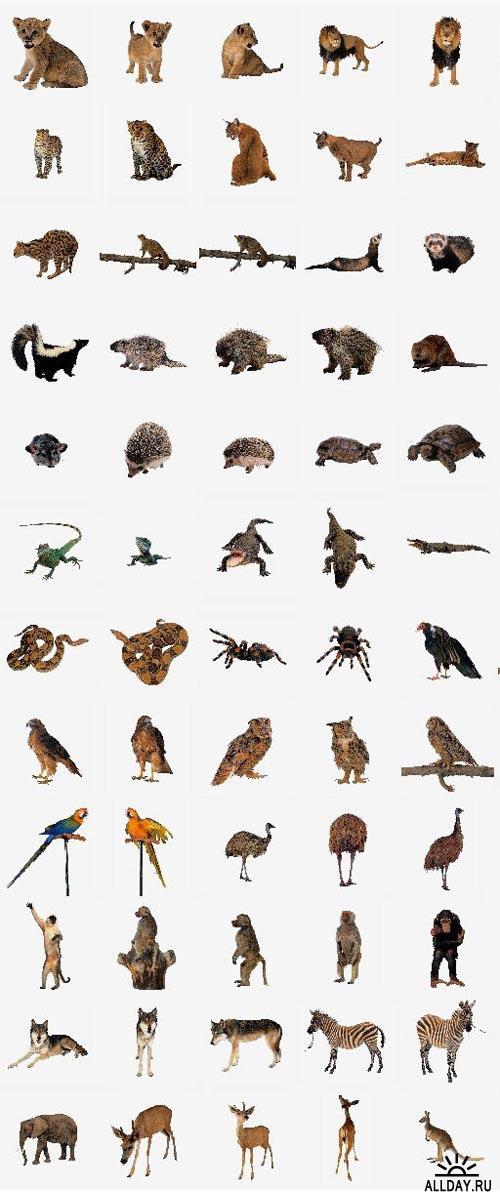 Animals  (OS21)