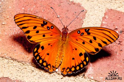 Обои с прекрасными бабочками для рабочего стола