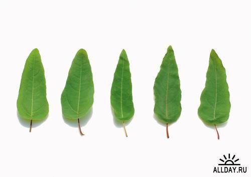 Photostock - Herbs & Spices