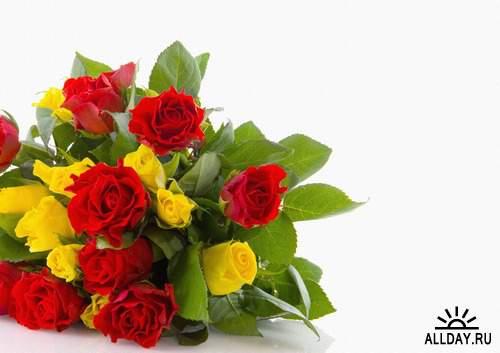 Flowers: Red and burgundy roses 4 | Цветы - красные и бордовые розы 4