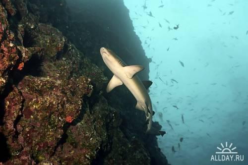Подводный мир ч.2