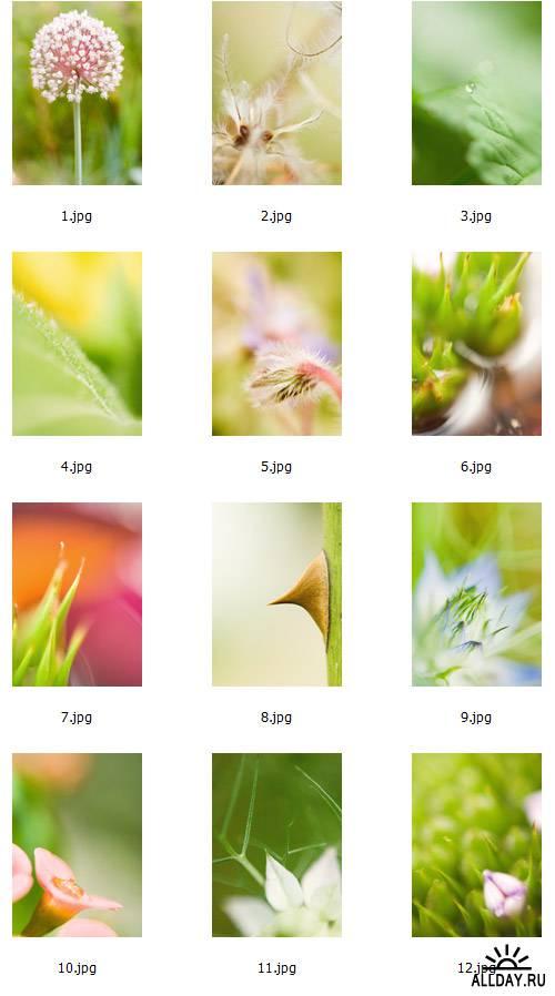 Macro Plants