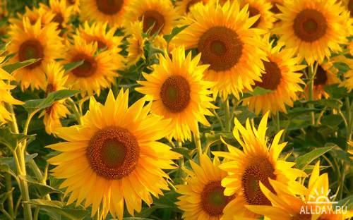 Цветы для фона рабочего стола