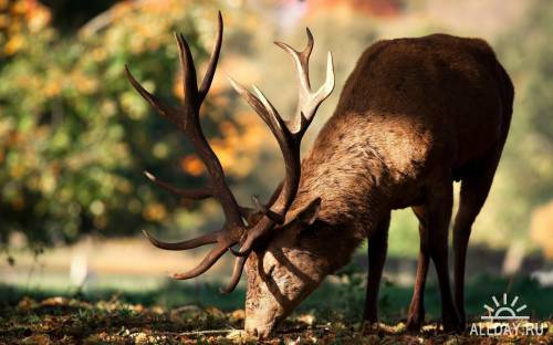 50 Beautiful Animals HD Wallpapers Set 48