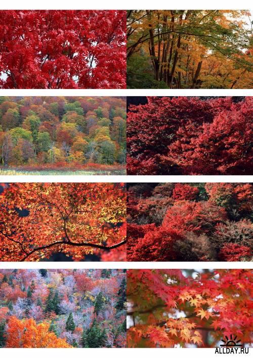 Очень красивые осенние пейзажи