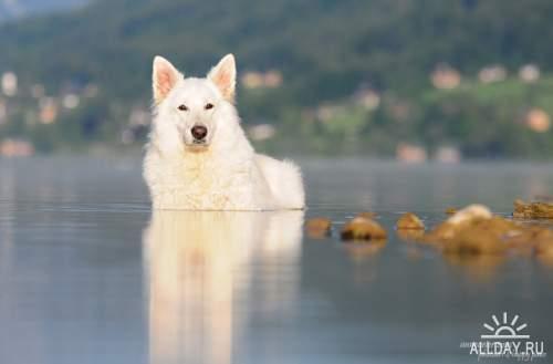 Мир в Фотографии - World In Photo 845