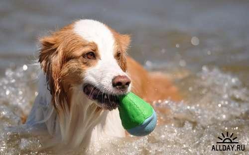 Подборка фото разных пород собак отличного качества выпуск 3