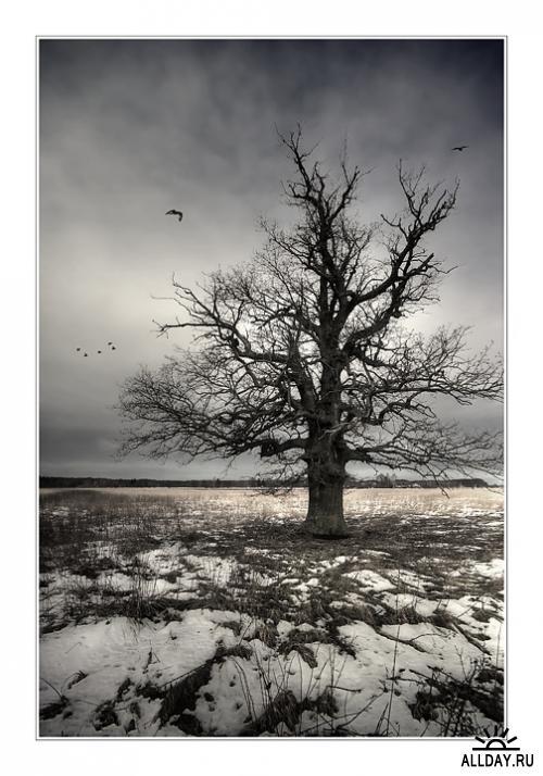 Природа. Фотограф Игорь Бегичев