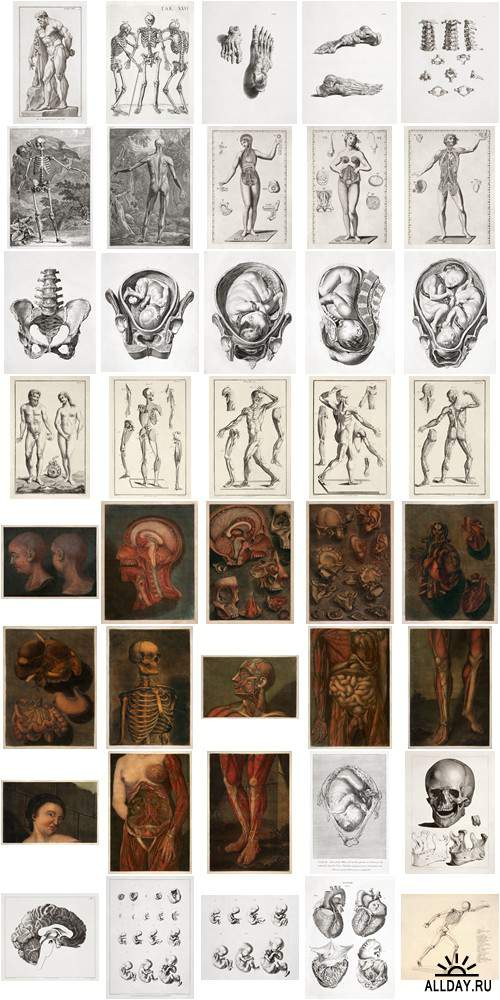 Visual Language 08 Art of Anatomy 1513-1879