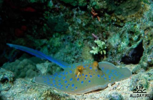 Photodisc - Under the Sea