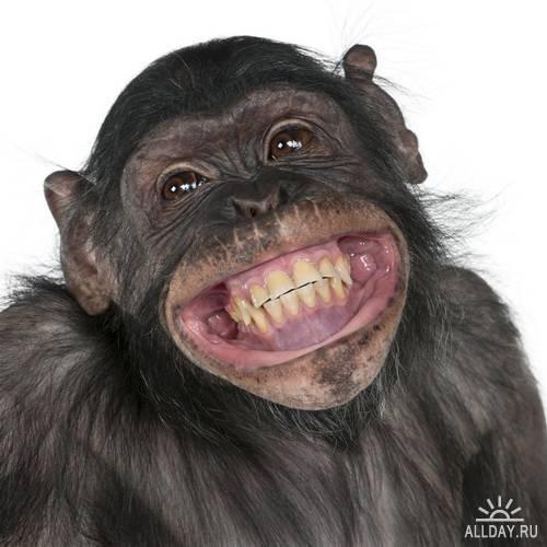 Улыбки животных / Animal Smile Stock Photo