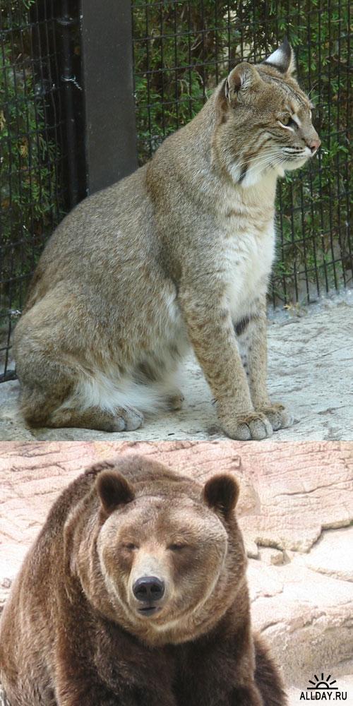 Фотоклипарт - animals 5