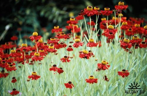 Image Source - Flowers