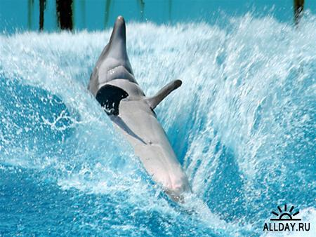 Обои - Дельфины 2