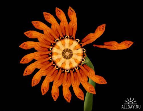 Необычные цветы Cecelia Webber