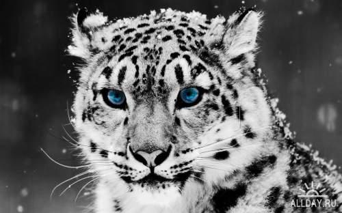 50 Beautiful Animals HD Wallpapers Set 80