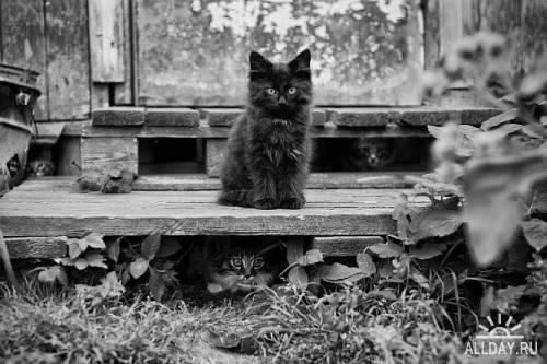 Котики ч. 102