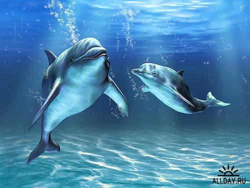 Дельфины - Dolphin