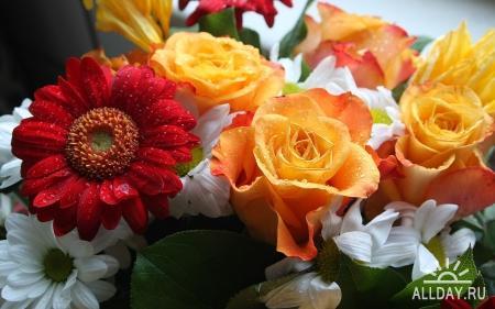Flowers WideScreen Wallpapers #6