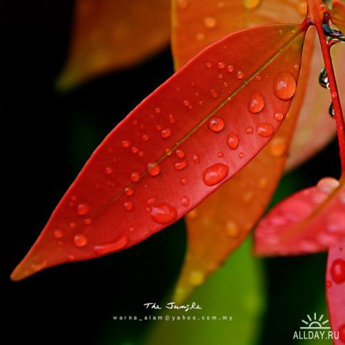 Фотограф под ником warnaiman