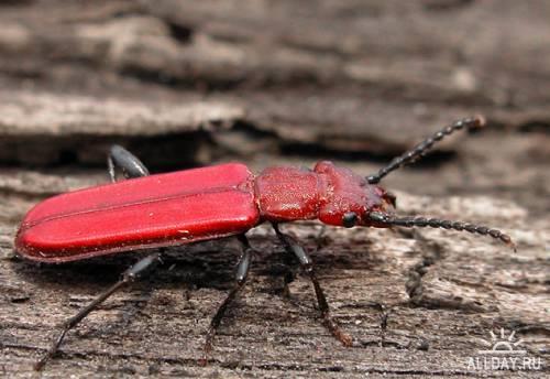 Окружающий мир через фотообъектив - Insects: Coleoptera (Насекомые: Жуки)Часть 5