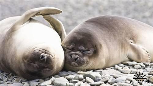 Обои в мире забавных животных часть 25