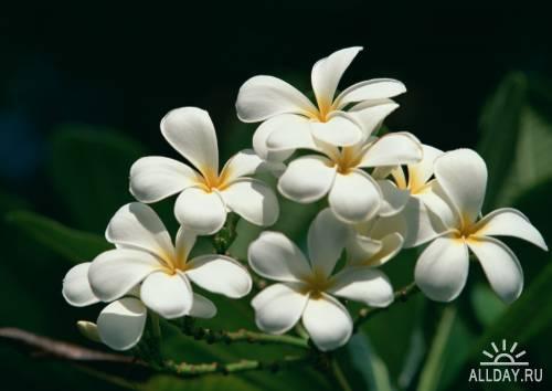 Фотосток – Тропические растения