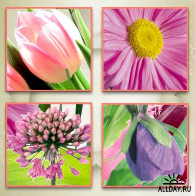 Cajoline - Spring Flowers - Commercial Use