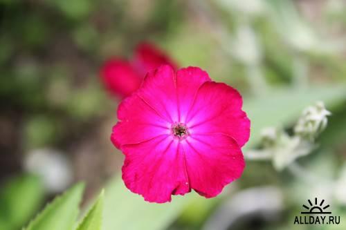 Фотосток – Цветущие поля 2