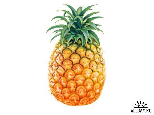 Фрукты (Fruits)