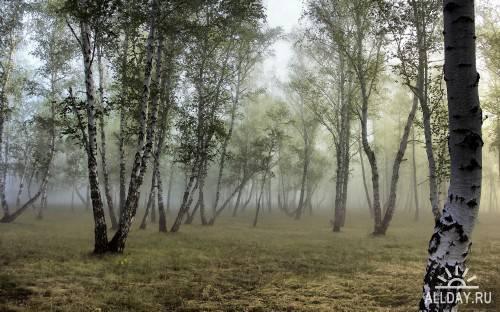 Качественные обои с прекрасной природой (Часть 7)