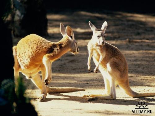 35 Australia Landscape