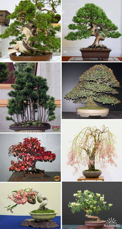 Art of Bonsai and Penjing p.7