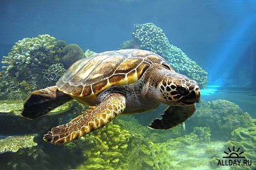 Stock Photo - Sea Life | Морская жизнь