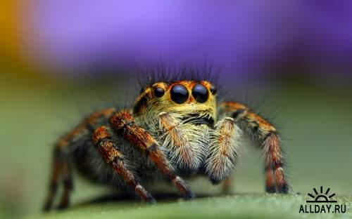 Обои с пауками для рабочего стола