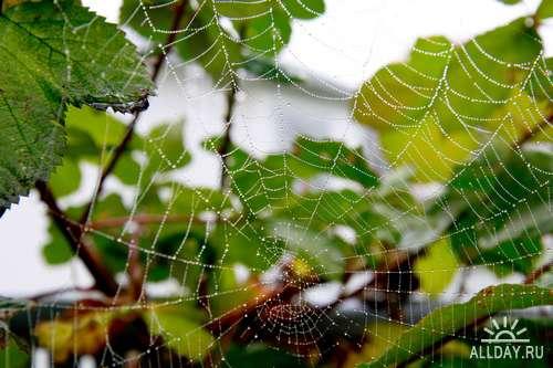 Spider 2 | Паутина 2