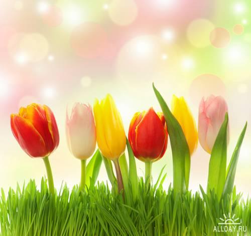 Весенние цветы | Spring Flowers - UHQ Stock Photo