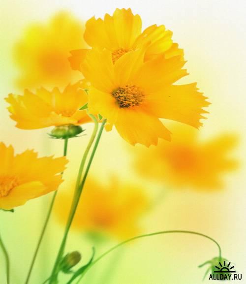 Wild Flowers 2 | Полевые цветы 2