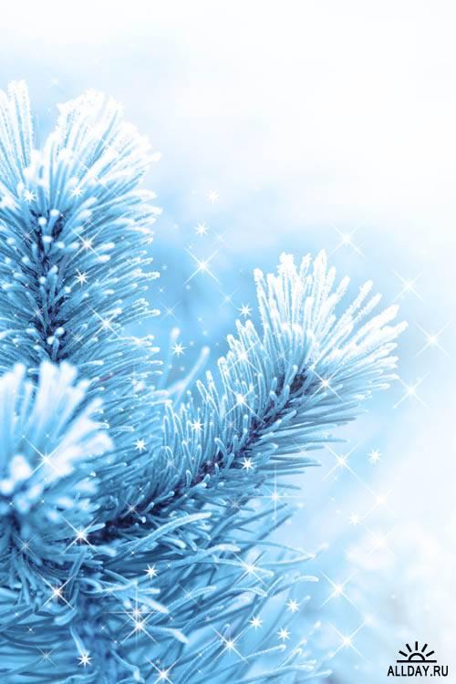 Голубые елки - Растровый клипарт   Blue xmas tree - UHQ Stock Photo