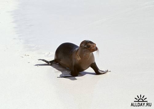 Арктические животные 2