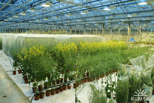 Glasshouse или как вырастить растение.