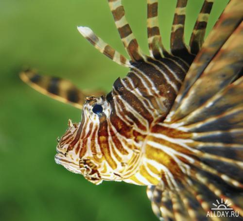 Fancy Photography Animalize