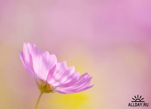 Zen-photo ч.118