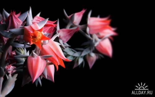 HD Обои на тему цветы