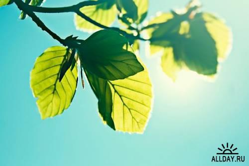 Zen-photo ч.15